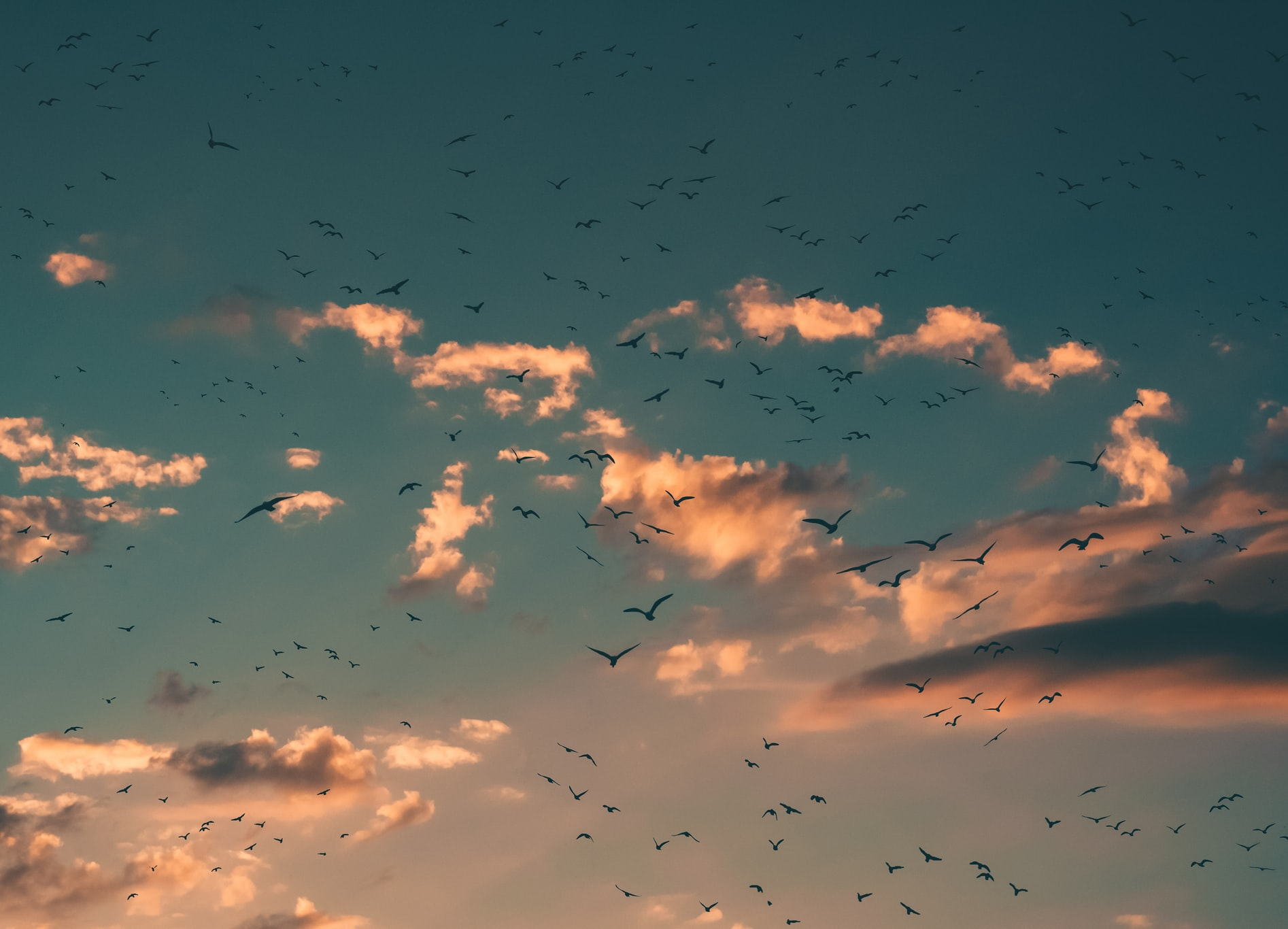 Dark Sky With Clouds and Birds
