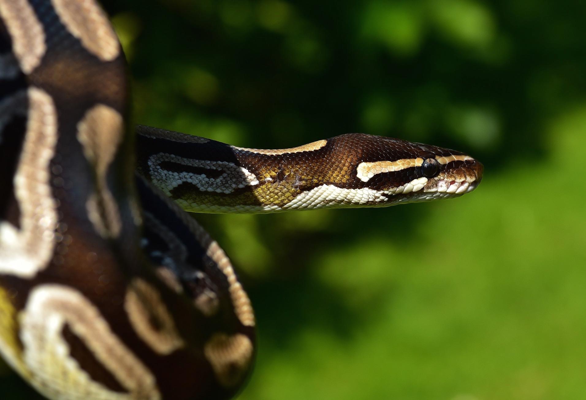 Enjoy Kubernetes with Python - Linux com